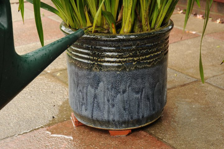 ensure the plant pot has plenty of holes to allow water to drain